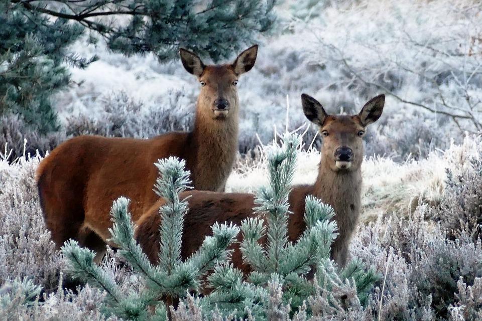 Luleå(S) Julkalender 3 december 2018