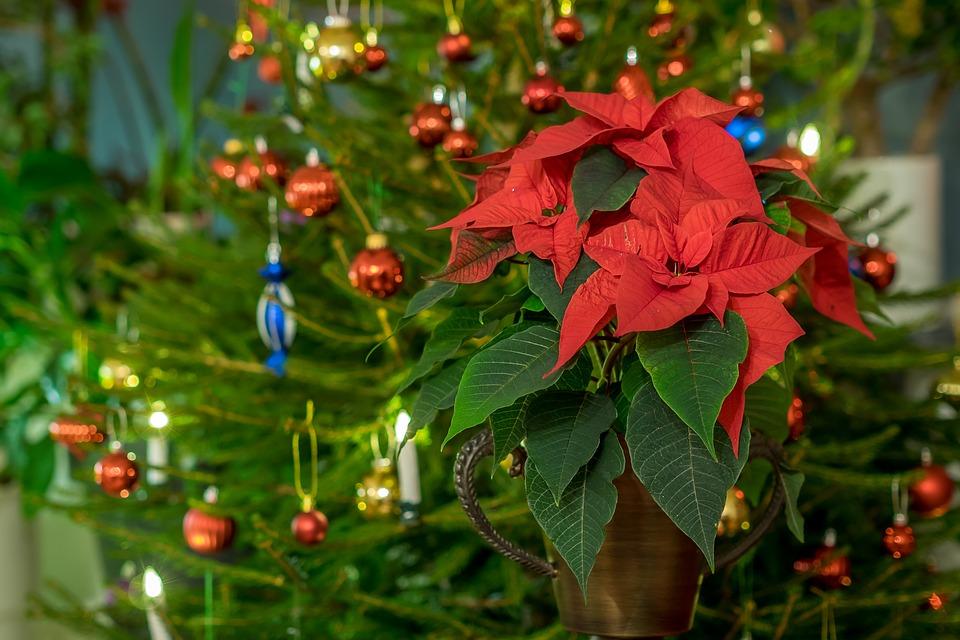 Luleå(S) Julkalender 12 december
